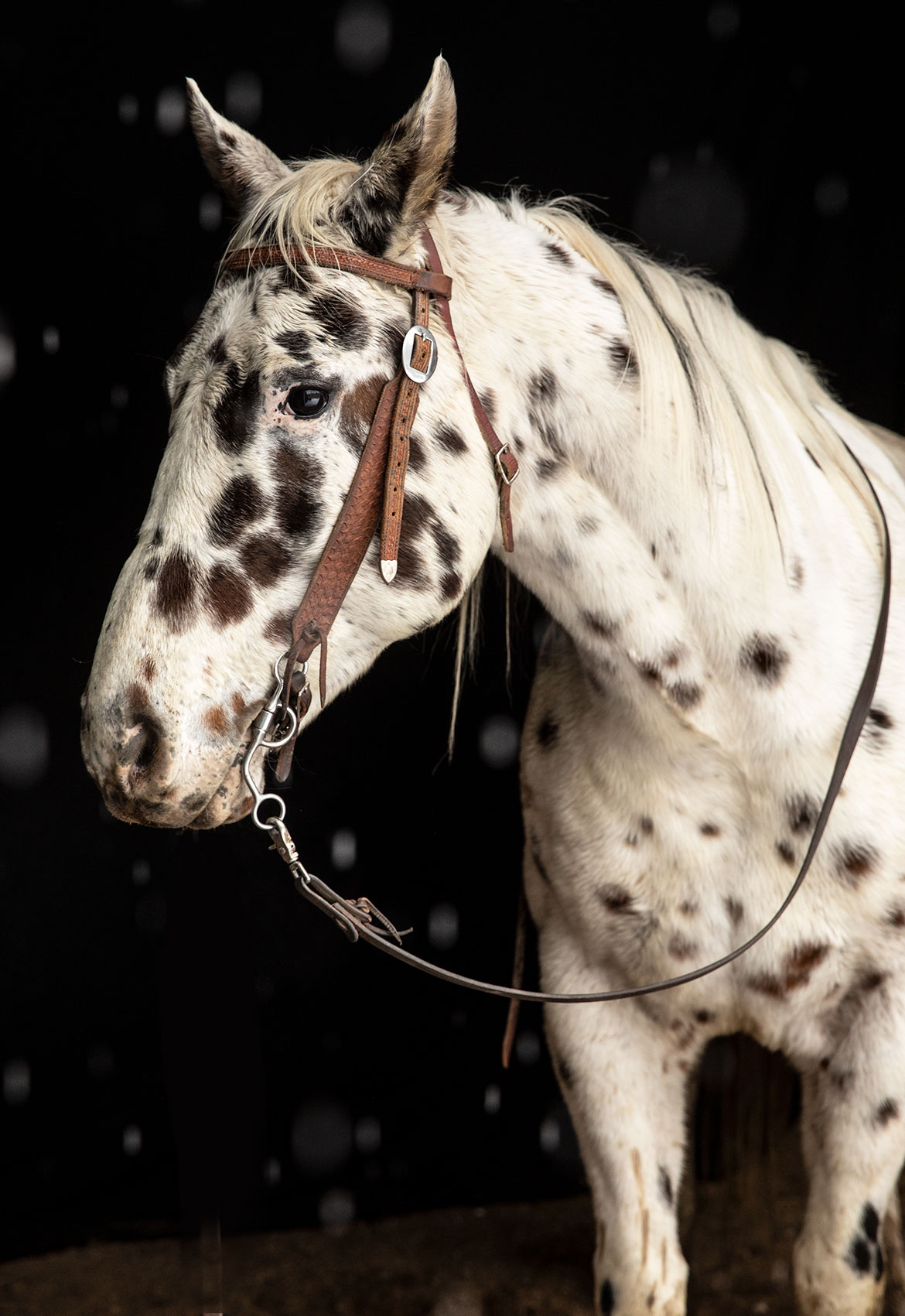 Horse-Portrait_2_JeanSweetPhotography