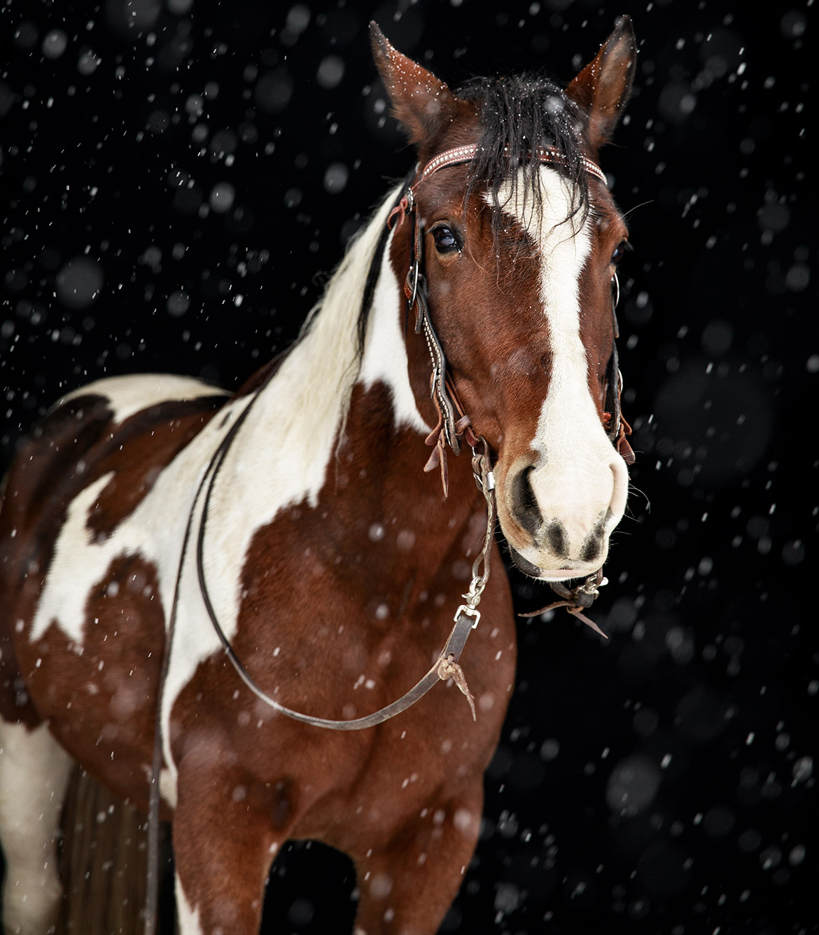 Horse Portrait by Jean Sweet Photography