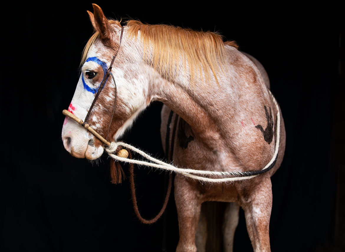 Painted-Horse_JeanSweetPhotography