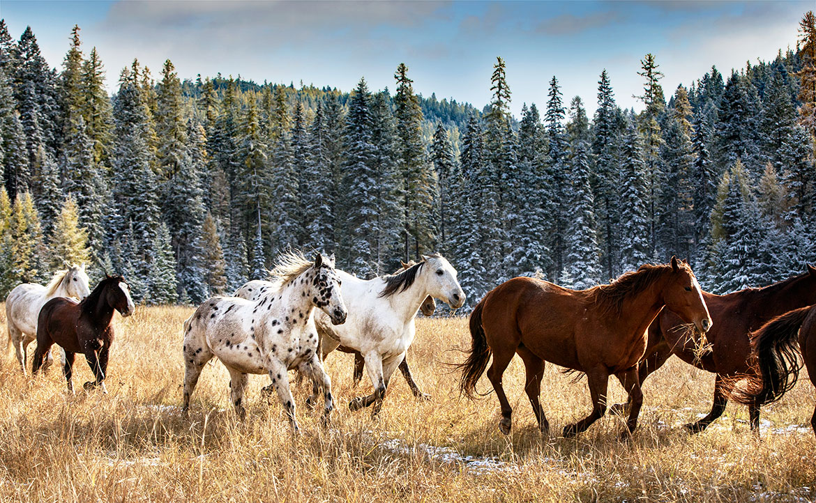 Running Horses - Jean Sweet PHotography