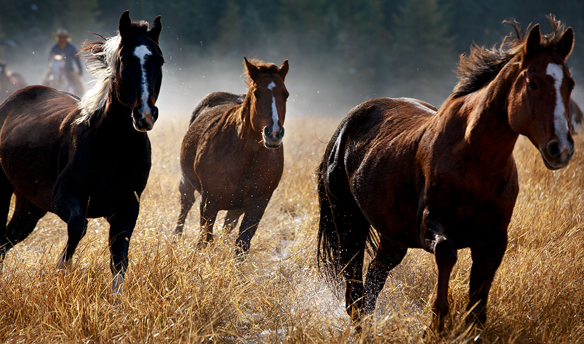 Running-Horses_JeanSweetPhotography
