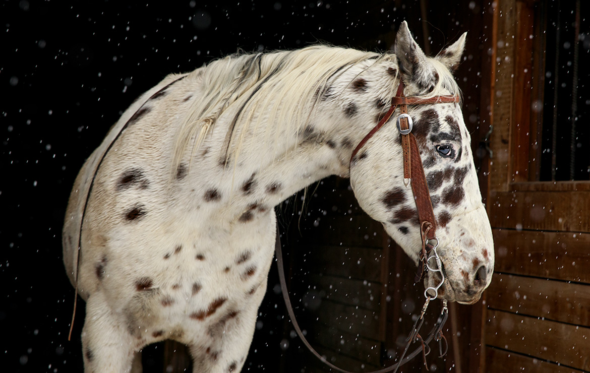 Spotted Horse - Jean Sweet Photography