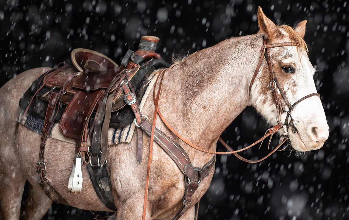 Horse and Saddle - Jean Sweet Photography
